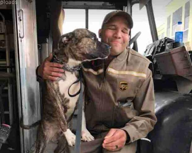 Прогулка, изменившая судьбу: пес встретил будущего хозяина и не ошибся в своем выборе