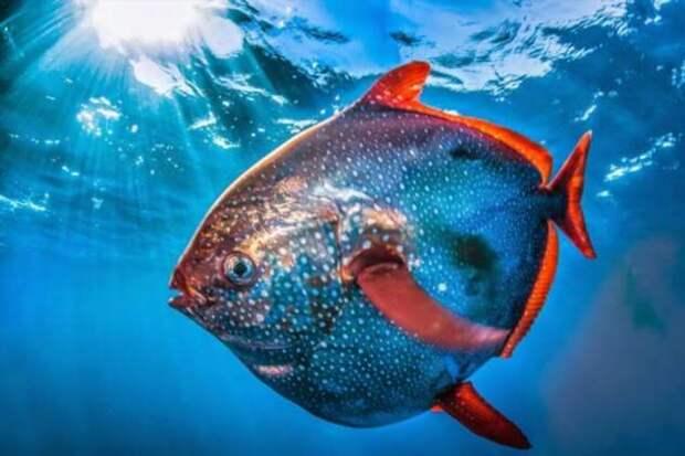 Почему рыбы не замерзают в холодной воде? (5 фото)