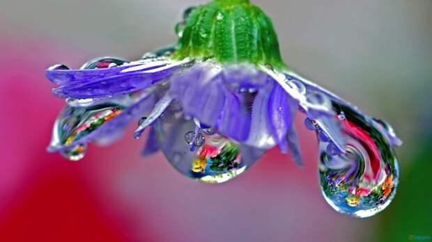 Flower, Drops, Dew, Stem Wallpapers Kingdom
