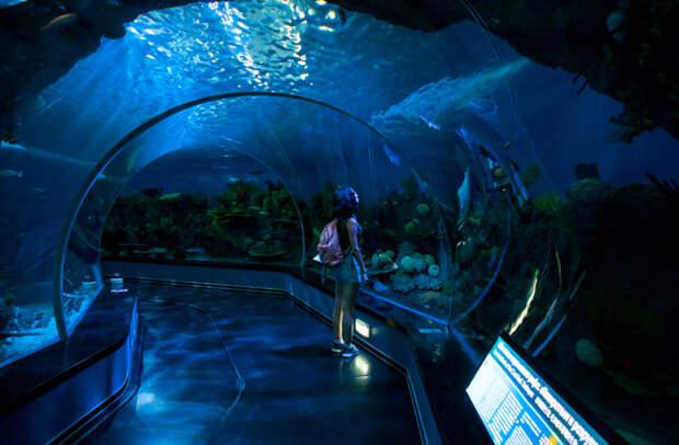Здесь и далее: Приморский океанариум, Владивосток