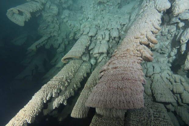 Располагаются эти необычные сталактиты на стыке слоёв галоклина и пресноводного.