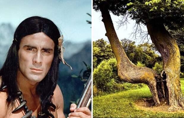 Секрет настоящих индейцев: Как легко ориентироваться в густом лесу и никогда не заблудиться