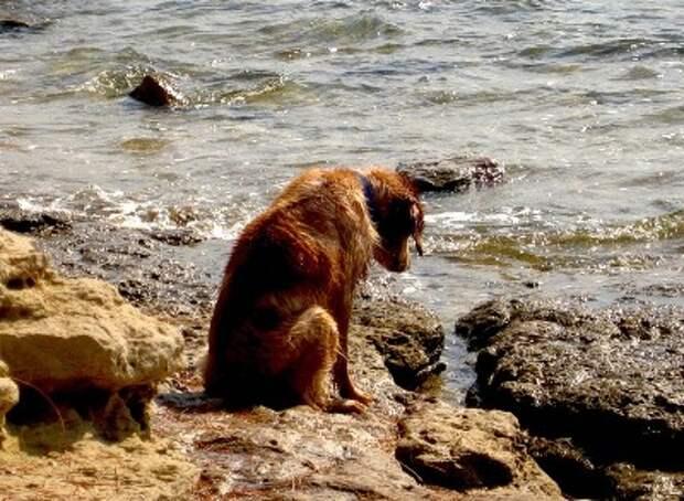 Собачья верность. Рассказ