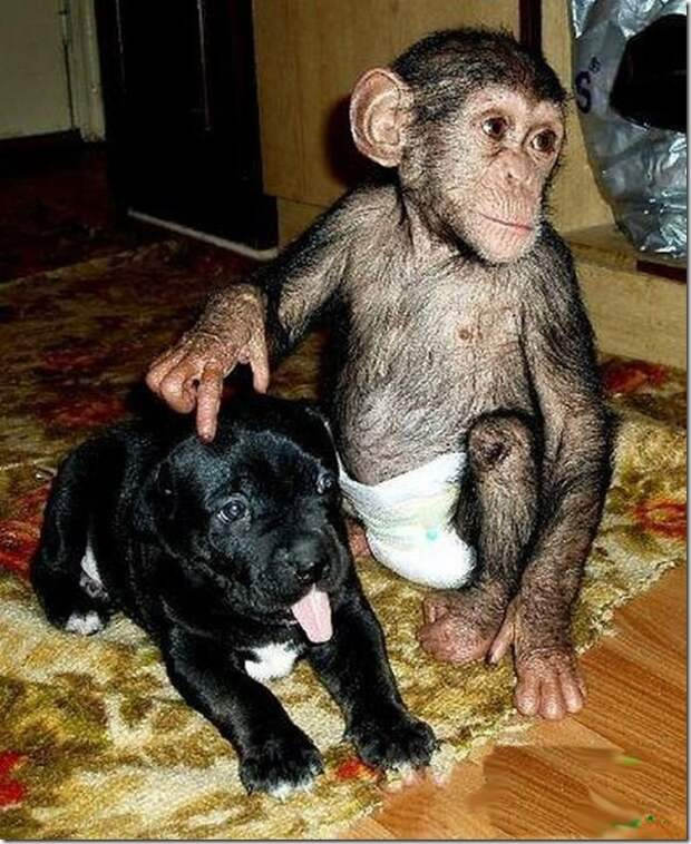 in-marmoset-a-new-mom_16_(www.funnypagenet.com)