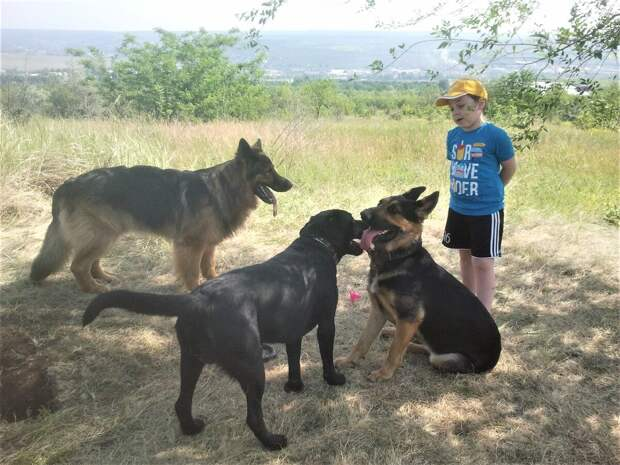 Полянка и мой внук на прогулке с собаками. Зевс, Дуглас, Кейси