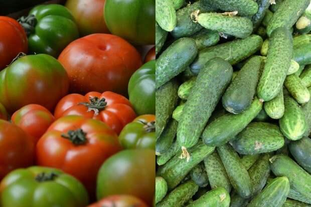 Чем необходимо полить грядки осенью, чтобы защитить огурцы и помидоры от вредителей и хворей на год вперед