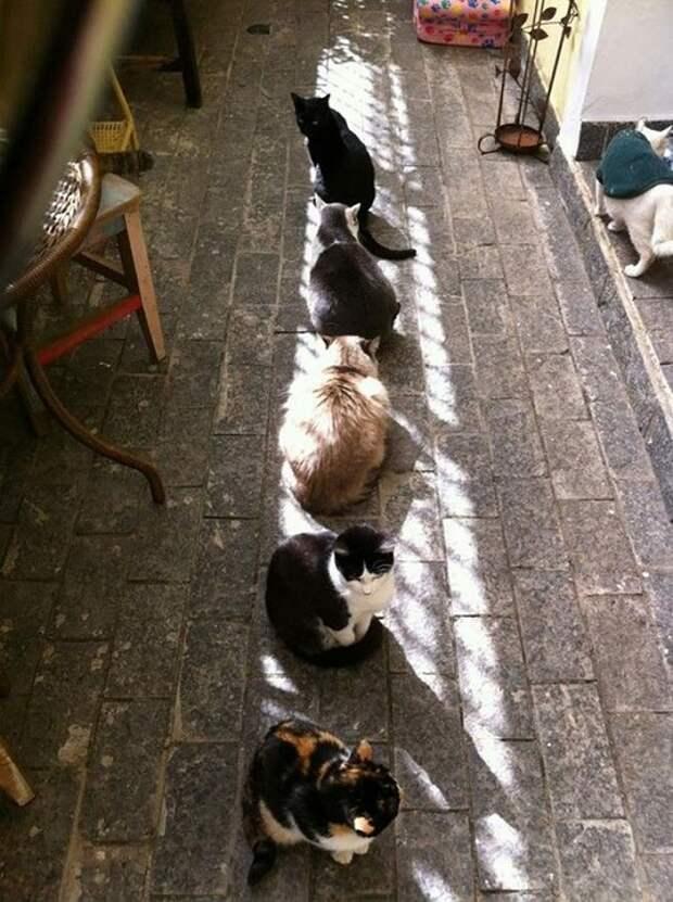 Кошки любят погреться на солнце.