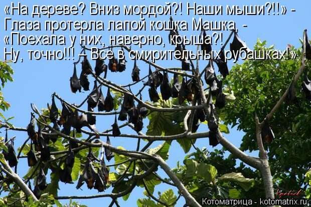 Котоматрица: «На дереве? Вниз мордой?! Наши мыши?!!» - Глаза протерла лапой кошка Машка, - «Поехала у них, наверно, крыша?! Ну, точно!!! – Все в смирительных ру