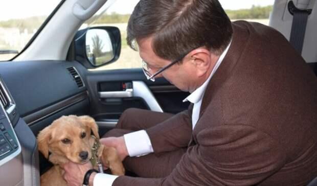 Глава администрации вБелгородской области рассказал оподобранном сулицы щенке