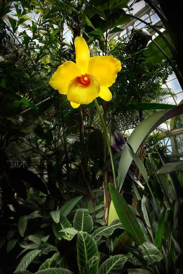 Jason Gamrath. Гигантские стеклянные цветы