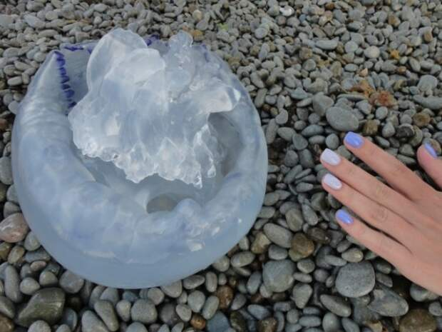 Ялту атаковали гигантские медузы (ВИДЕО, ФОТО)