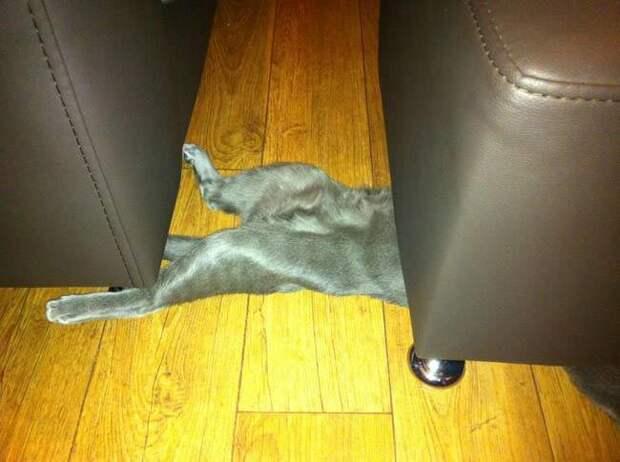 коты смешно спят, коты кошки спят в смешной позе, коты и кошки спящие смешное