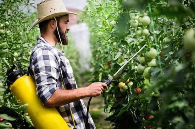 Как при помощи инсектицидных растений спасти урожай