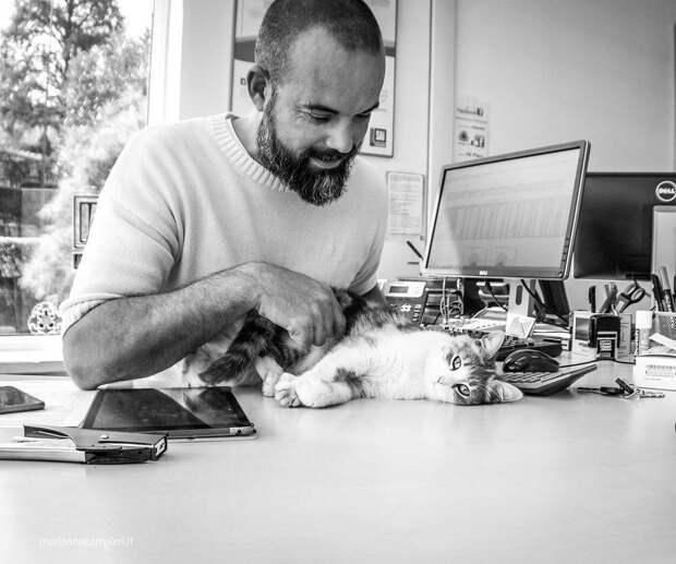 Фотографии кошек, которые живут в местах, где работают люди 23
