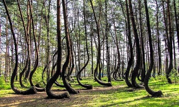 crooked-forest-12-610x366
