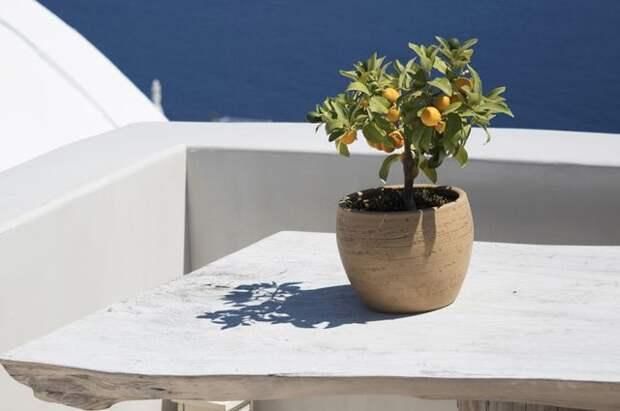 Для души и для тела. Вот какие комнатные растения полезны для здоровья