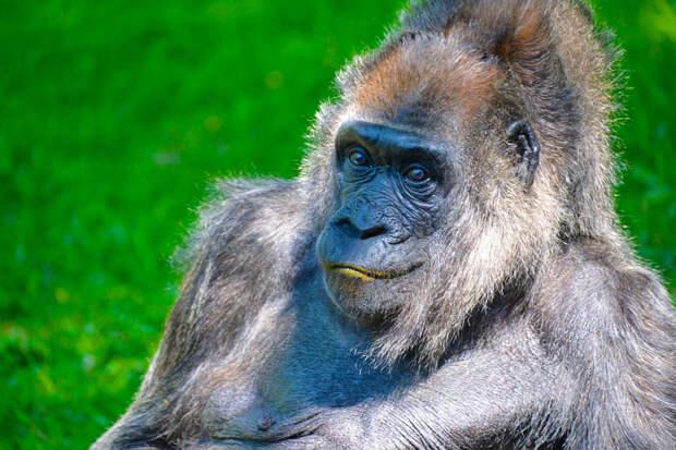37 фотографий животных, которые вызывают улыбку - 8