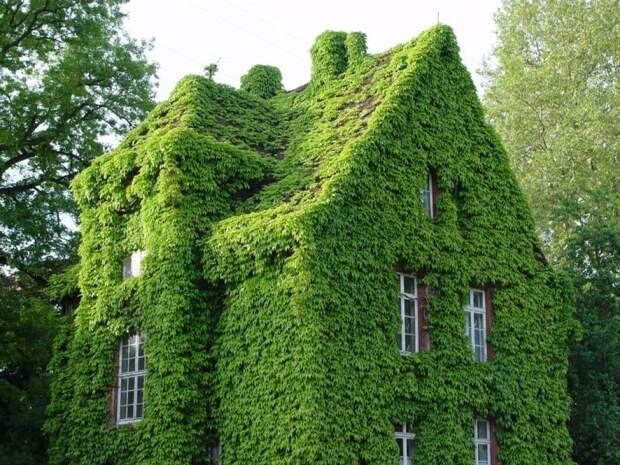 Красивые дома, которые просто утопают в море цветов