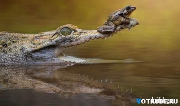 Дружба животных Выпуск 343 (34 фото)
