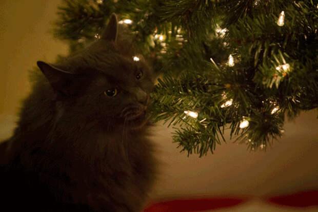 елка, животные, коты, новой год