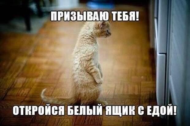 Ничто так не поднимет настроение, как выходки кота