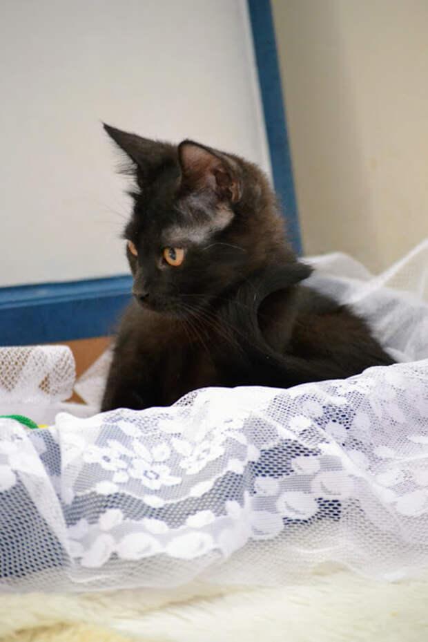 Особенный котенок ищет дом
