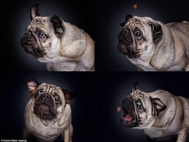 10 зворушливих моментів, коли собака виглядає емоційно - фото 7