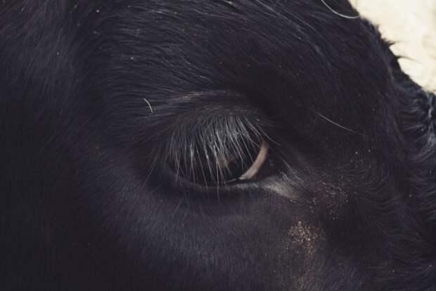 Проникновенные глаза животных из зоопарка (17 фото)