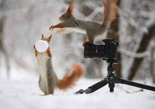 Ближе, смотрим прямо в камеру! Вадим Трунов, белки, животные, фотограф