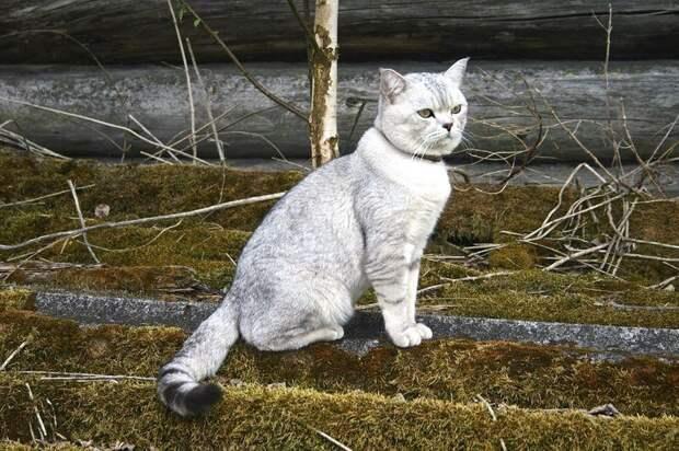 Вознаграждение в 20 тыс рублей объявили за пропавшего по дороге в Ижевск кота
