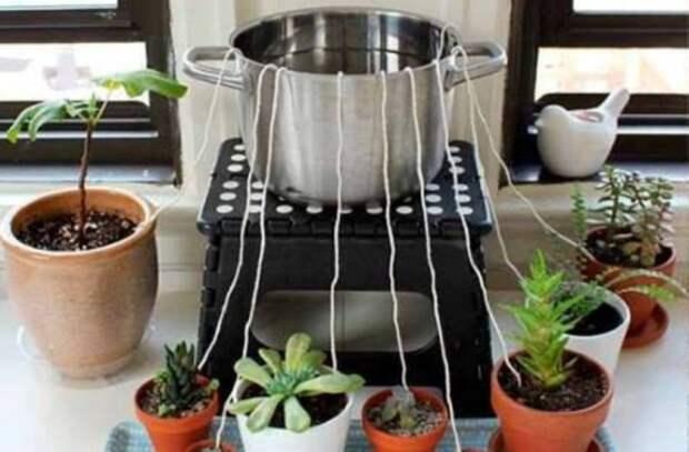полив домашних растений: Сознательное потребление