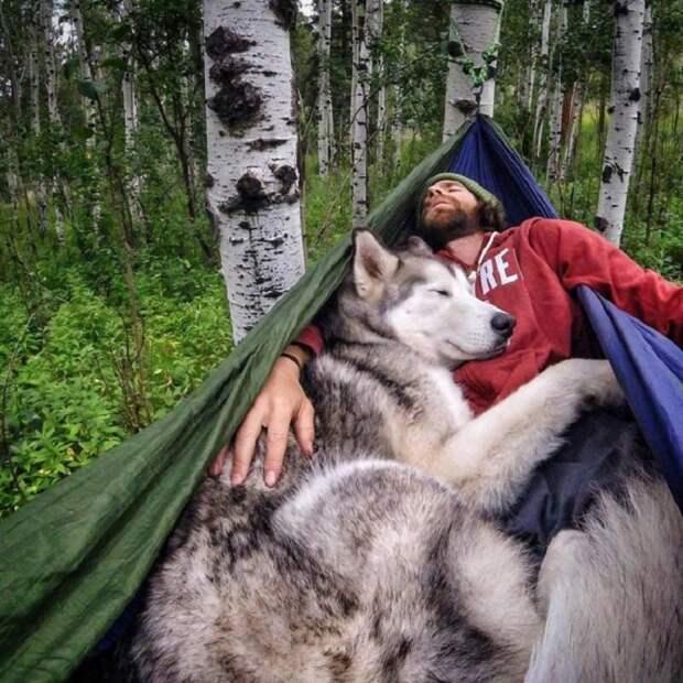 Келли Ланд, отправляясь в путешествие, всегда берет свою собаку (смесь хаски, волка и маламута) по кличке Локи с собой. Молодой человек уверен, что собаки созданы не для того, чтобы просто охранять дом, сидя на заднем дворе.