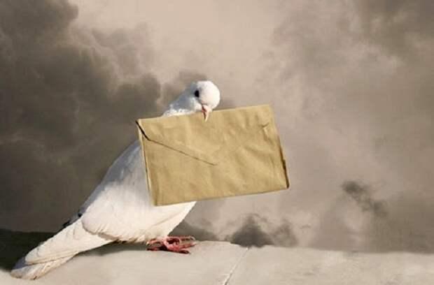 В Белоруссии накрыли притон с почтовыми голубями, агитирующими за оппозицию