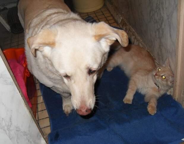 Хамура Кусаки: три месяца в доме дружба животных, кот, пёс