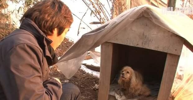Мужчина и бездомный пес