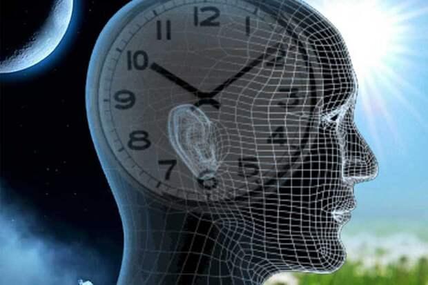 """Изучено влияние """"мусорной"""" ДНК на циркадные """"часы"""" человеческого организма"""