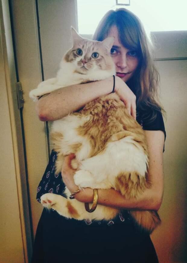 3. А что, сейчас время обеда??? животные, коты, милота, огромные коты
