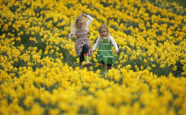 Зима — уходи! Ранние весенние цветы