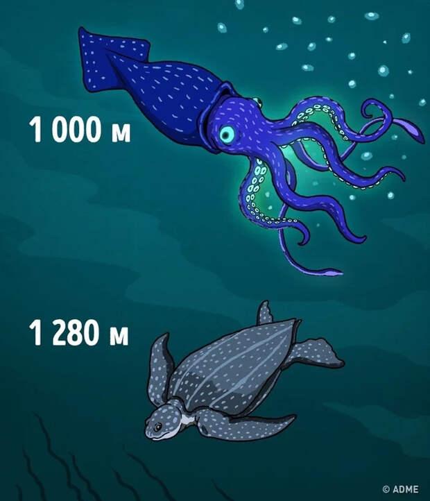 Про глубину, и то, что в ней находится Подводный мир, Подводная лодка, Рыба, Глубина, Длиннопост