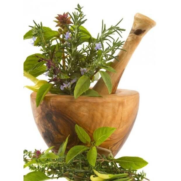 Травы и зелень для молодости кожи