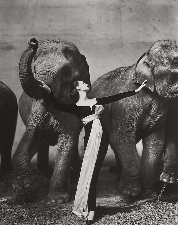 Обнаженная модель со слоном в серии черно-белых фотографий