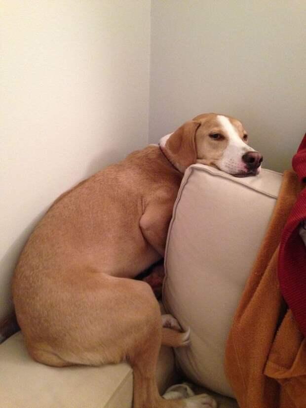 Веселые собаки знающие толк в отдыхе