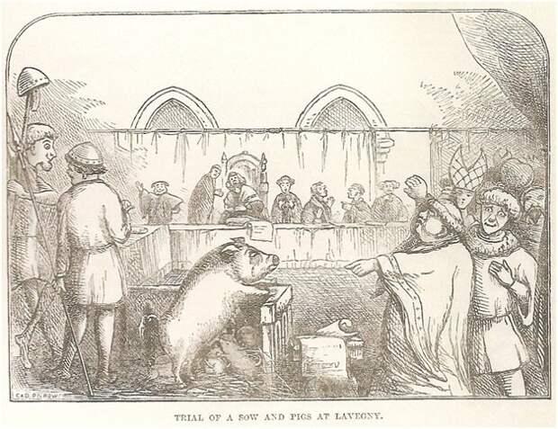 суд на животными в Европе