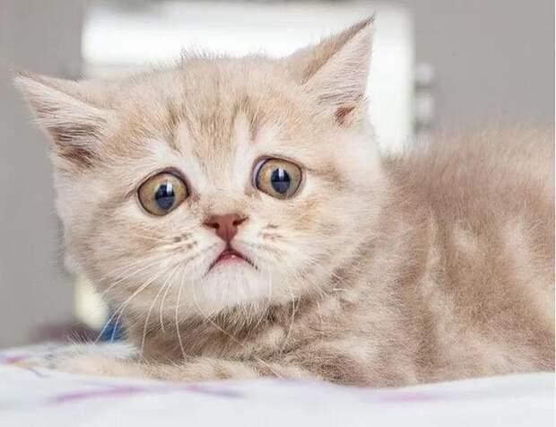 Котенок с очень большими глазищами нашел свое счастье