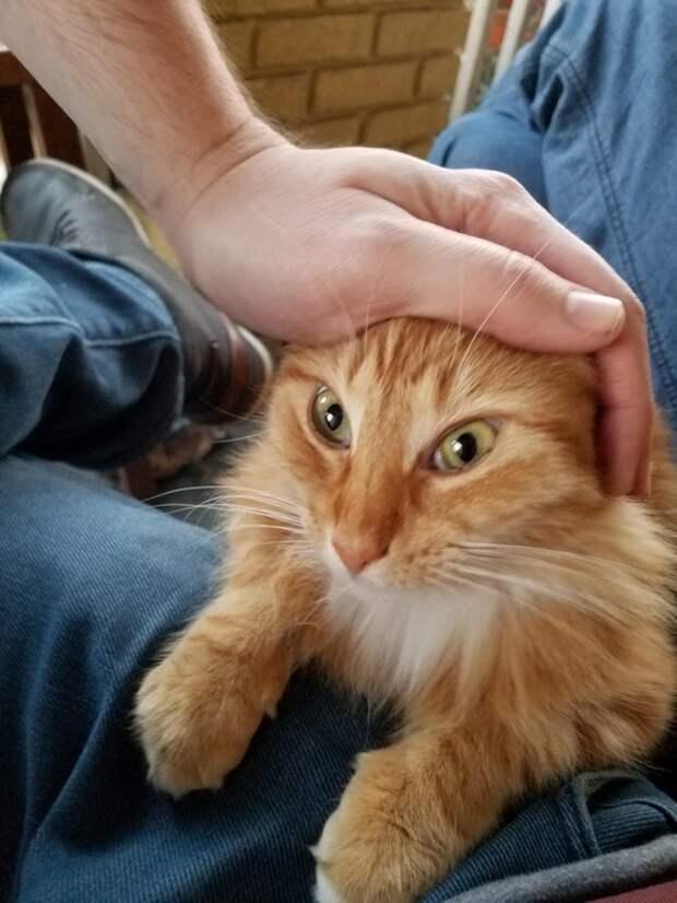 2. Когда хозяин перестанет меня гладить? животные, коты, кошки, милота, питомцы, фото