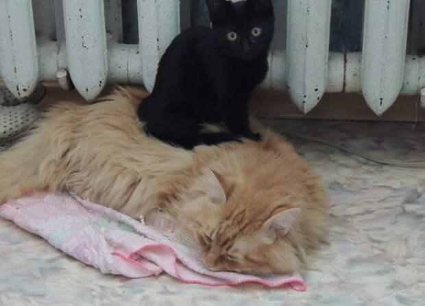 Что за чудо эти кошки!