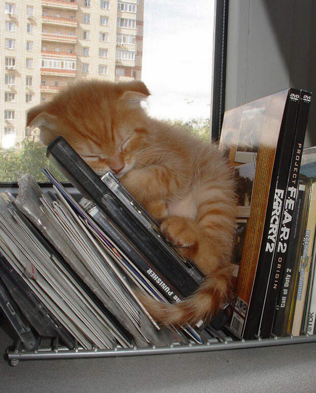 5. Спящее чудо котенок, сон