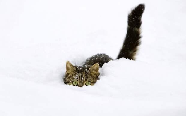 21 причина полюбить зиму