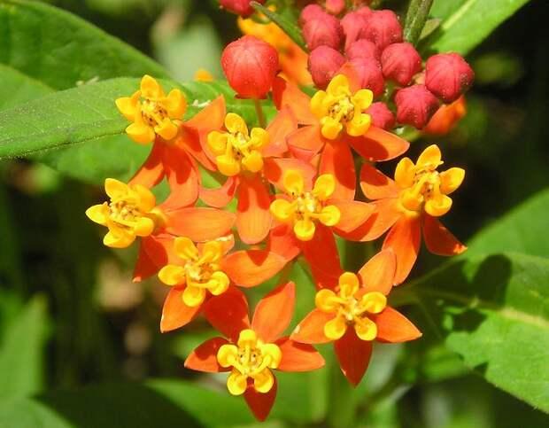 Ботанический сад (Тель-Авив - 2006) - madam - Photo.Qip.ru / id: vas