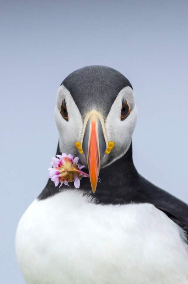 20 фотографий, с которых природа смотрит на тебя